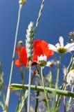 meadow lato Zdjęcie Stock