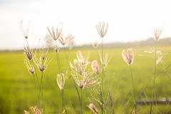 The meadow on the light Stock Image