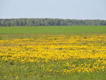 Meadow, Lithuanian spring landscape Royalty Free Stock Photography