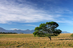 Meadow and lone tree. Farmland meadow with a lone tree against the sky Royalty Free Stock Images