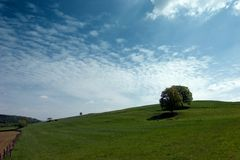 Meadow with lone trees. Wide angle shot of a sloped meadow with some lone trees. A group of cows lies in front of the right hand tree Royalty Free Stock Photography