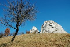 Meadow with lonely tree and white cliffs Stock Photos
