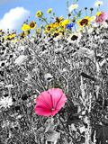 Meadow with a lot of colored flowers Royalty Free Stock Image