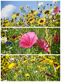 Meadow with a lot of colored flowers Royalty Free Stock Photography