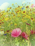 Meadow with a lot of colored flowers Royalty Free Stock Photos