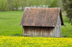 Dandelion Meadow And Shed Stock Image