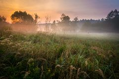 Foggy Meadow in the Lublin region. Stock Photos