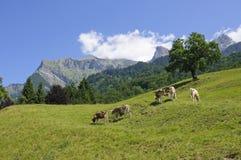 Meadow in Maienfeld, Switzerland Stock Photo