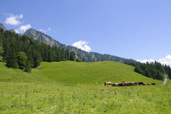 Meadow in Maienfeld, Switzerland Royalty Free Stock Photos