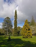 Meadow with many different trees in Dublin botanic gardens in spring. Park with f many different trees in Dublin botanic gardens in spring stock images