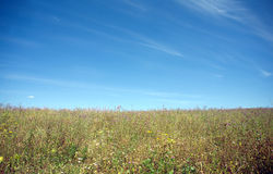 Meadow with many field flowers under beautiful blue sky Royalty Free Stock Images