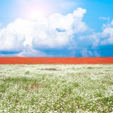 Meadow with many flowers Stock Photography