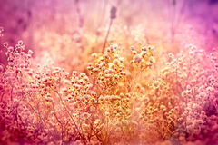 Meadow with many flowers Royalty Free Stock Photography