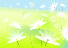 Meadow of marguerites-illustration Stock Images