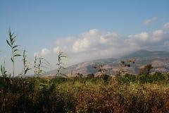 Meadow. S near kibbutz Dafna, Israel Stock Photography