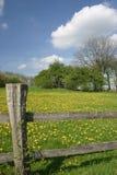 meadow mniszek Fotografia Royalty Free