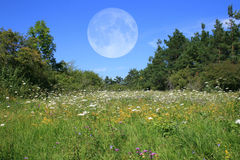 Meadow With Moon Stock Photo