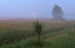 Meadow in moonlight. Meadow in Poland, near Szczecin,rural meadow in moonlight Stock Photography