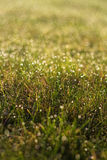 Meadow and morning dew. The picture shows grass covered with dew royalty free stock image