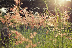Meadow morning Stock Photography