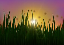 Meadow in the morning with sparkle of golden sunlight, nature background. Vector illustration royalty free illustration