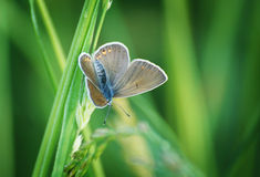 Meadow moth on grass Stock Image