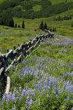 Meadow mountain fence Stock Photo