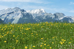 Meadow and mountain Royalty Free Stock Photography