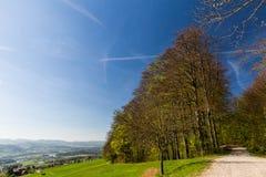 Meadow on Mountain Heitersberg, near Zurich Royalty Free Stock Image