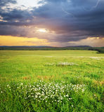 Meadow in mountain Royalty Free Stock Photo