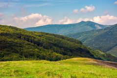 Meadow on a mountain slope. Few trees on a hillside meadow in high mountains on a summer day Stock Image