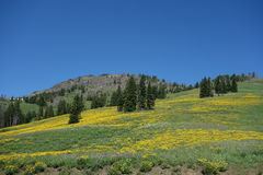 Meadow at a mountain summit in wyoming. Royalty Free Stock Images