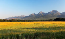 Meadow and mountain Royalty Free Stock Photo