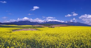 Meadow and mountains. A view of yellow meadow and mountains in distance royalty free stock photos