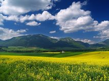 Meadow and mountains. A view of yellow meadow and mountains in distance royalty free stock photo