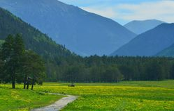 Meadow in mountains Stock Image