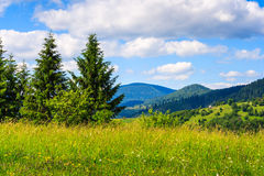 Meadow with in the mountains. Meadow with fir trees in the mountains in summer Stock Photos