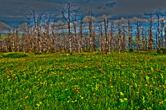 Meadow mountains flowers dry trees HDR Royalty Free Stock Image