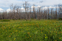 Meadow mountains flowers dry trees Stock Image