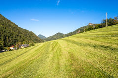 Meadow in the Mountains, Grossraming, Upper Austria Royalty Free Stock Photos