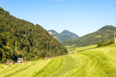 Meadow in the Mountains, Grossraming, Upper Austria Royalty Free Stock Image