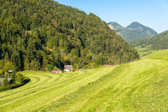 Meadow in the Mountains, Grossraming, Upper Austria Stock Photography