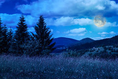 Meadow with in the mountains. Meadow with in high mountains by the forest at night Royalty Free Stock Photo