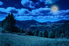 Meadow in mountains. Meadow near coniferous forest in mountains at night Royalty Free Stock Photography