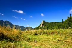 Meadow in mountains Stock Images