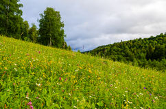 Meadow on a mountainside with forest Royalty Free Stock Photo