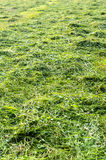 Meadow mowed for hay Royalty Free Stock Images