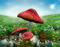 Meadow with mushrooms Stock Photo