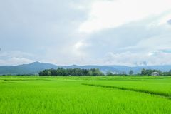 Green field and blue sky. The meadow in Nan province of Thailand stock photo