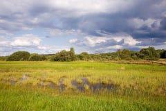 meadow naturalne moczy opuszczony zdjęcia stock